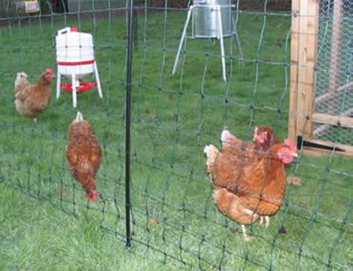 Chicken Wire (also known as Hexagonal Wire), Used for Poultry ...