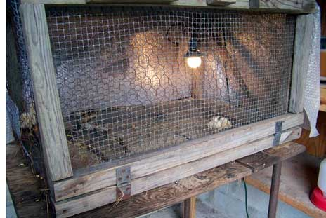 Poultry Cage Chicken Wire Products Aiji Chicken Wire Co