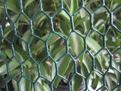 Vinyl Coated Chicken Wire Black And Green For Garden